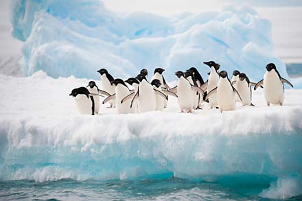 Bespoke-Tours_Antarctica