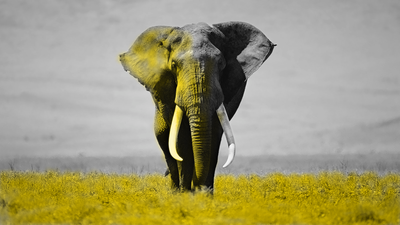 rsz_elephant_yellow2